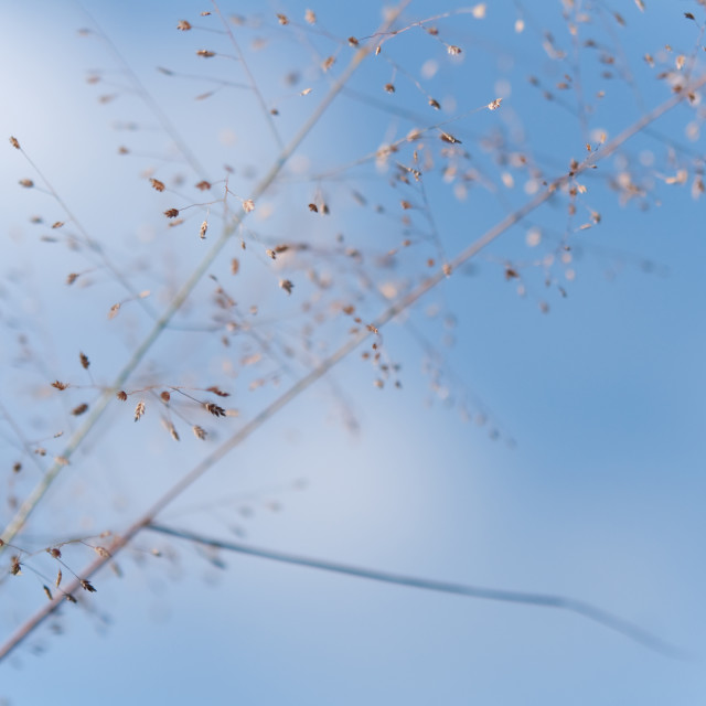 """""""Airy macro photograpy of the grass"""" stock image"""