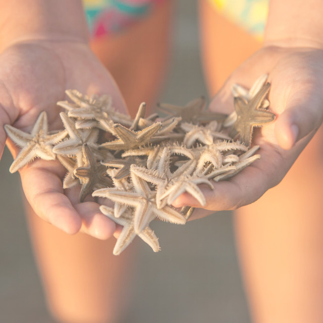 """""""Bunch of seastars in the woman hands"""" stock image"""