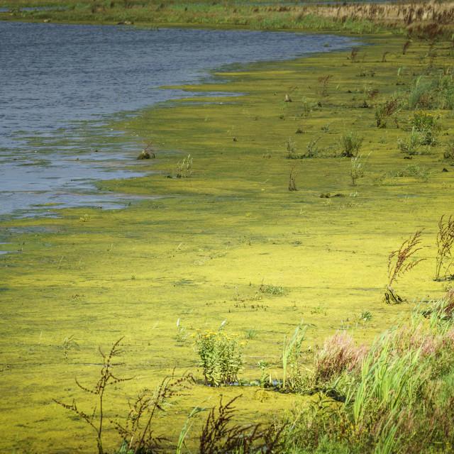 """""""Dutch wetlands"""" stock image"""