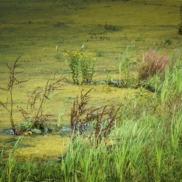 """""""Wetlands and plant life"""" stock image"""
