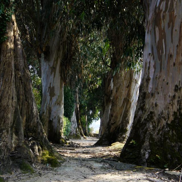 """Trees passage way"" stock image"