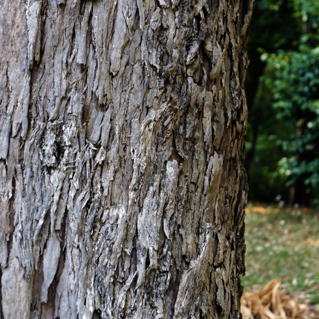 """Tree trunk"" stock image"