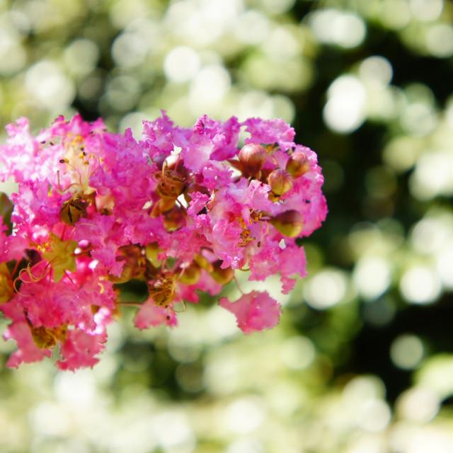 """Flowers shallow DoF"" stock image"