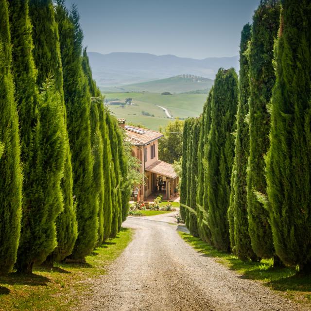 """Tuscan drive"" stock image"