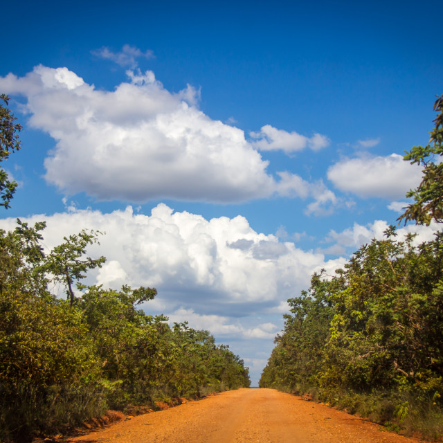"""Dirt Road"" stock image"