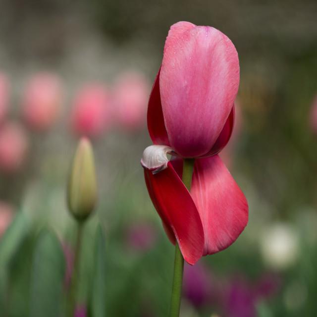 """""""Spring garden"""" stock image"""