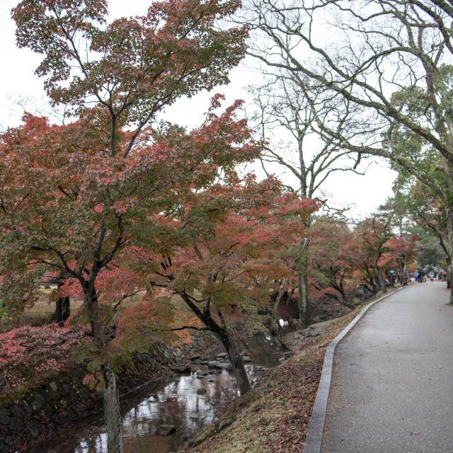 """Nara Park, Japan"" stock image"