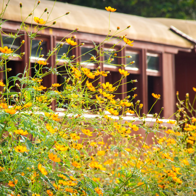 """Yellow flowers near the old train"" stock image"