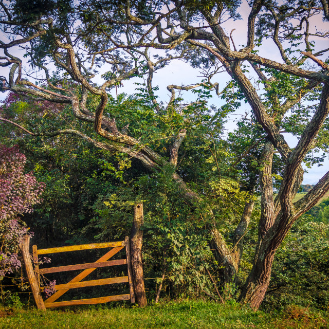 """Wooden Gate"" stock image"