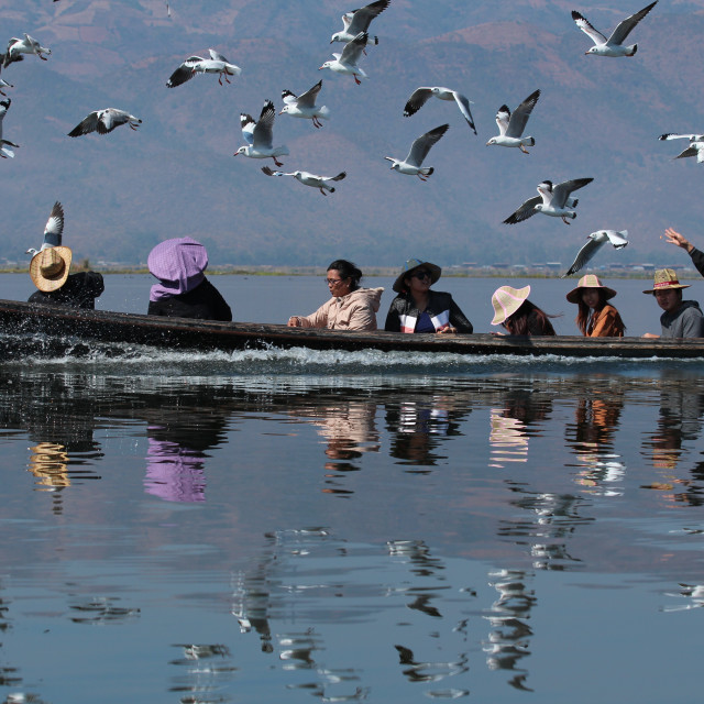 """Bird feeding at Inle Lake"" stock image"