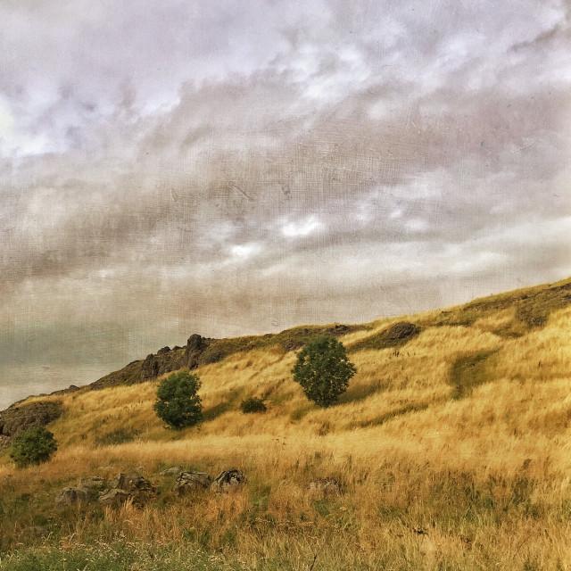 """""""Holyrood Painterly"""" stock image"""