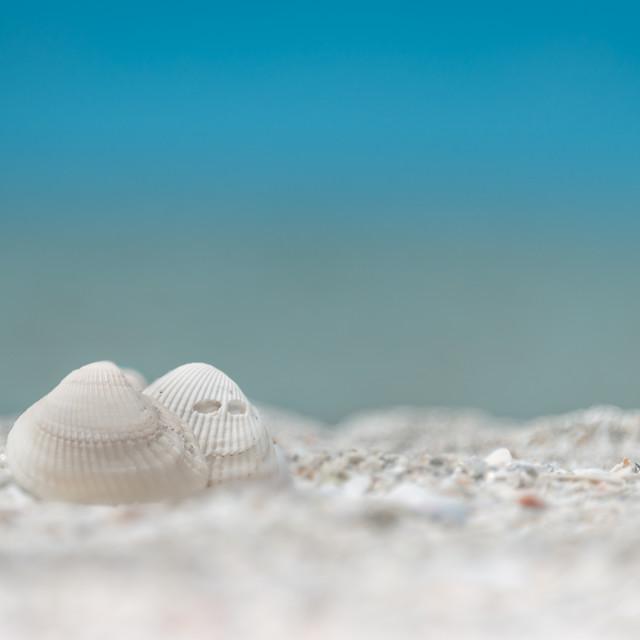 """seashell"" stock image"