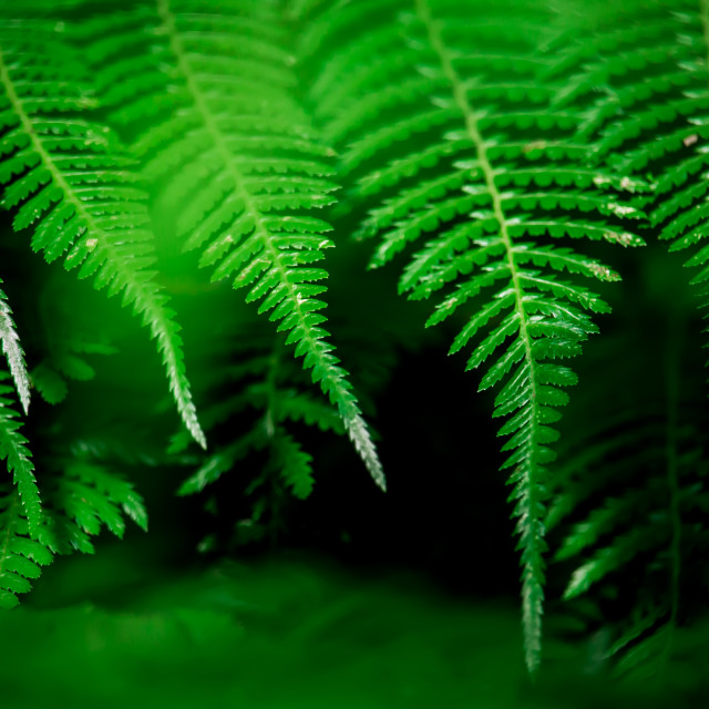 """Fairweather Fronds"" stock image"