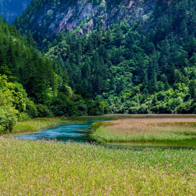 """Reed Lake, Jiuzhaigou"" stock image"