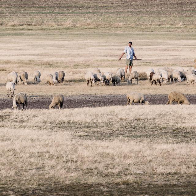 """Shepherd from Romania"" stock image"