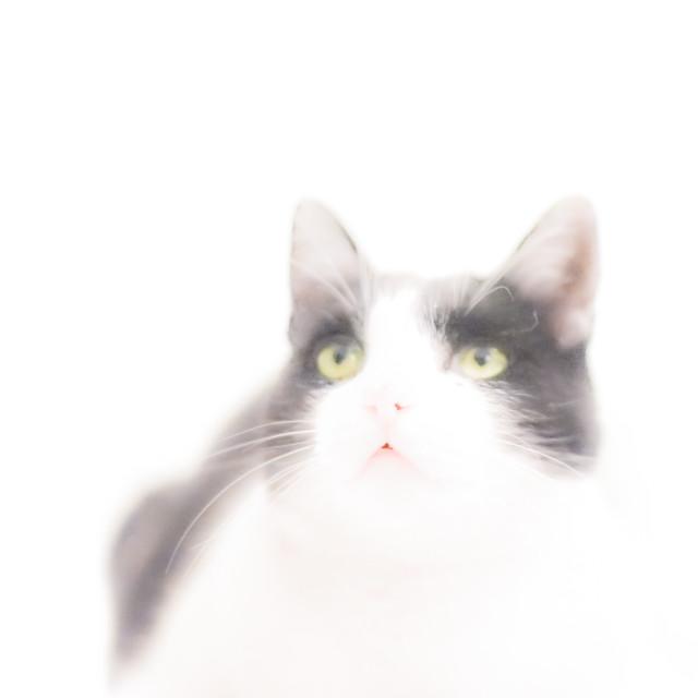 """High Key Cat"" stock image"