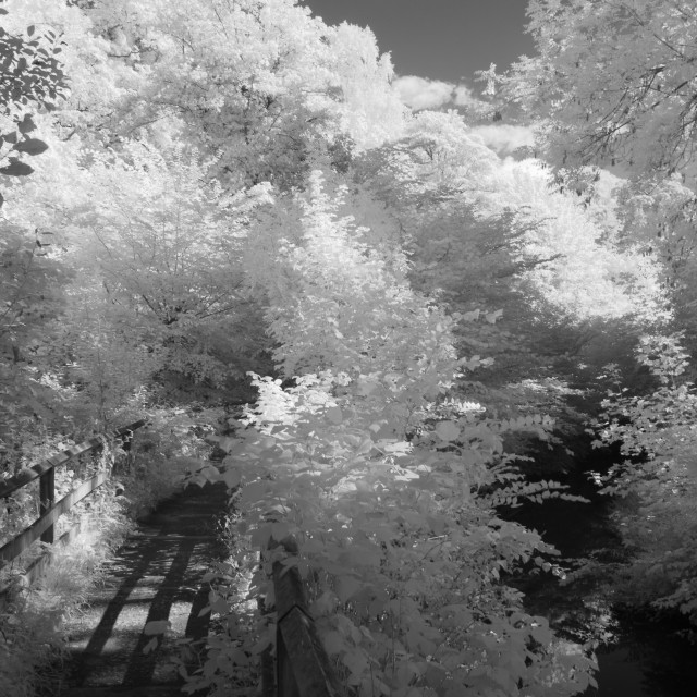 """Infrared woodland path."" stock image"