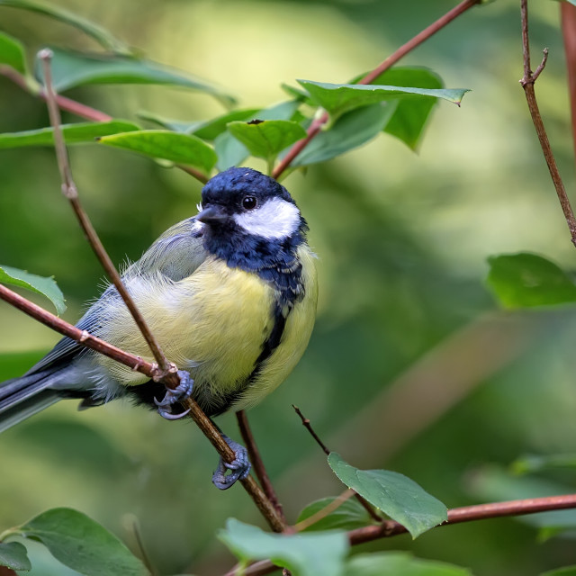 """Tit in the forest"" stock image"