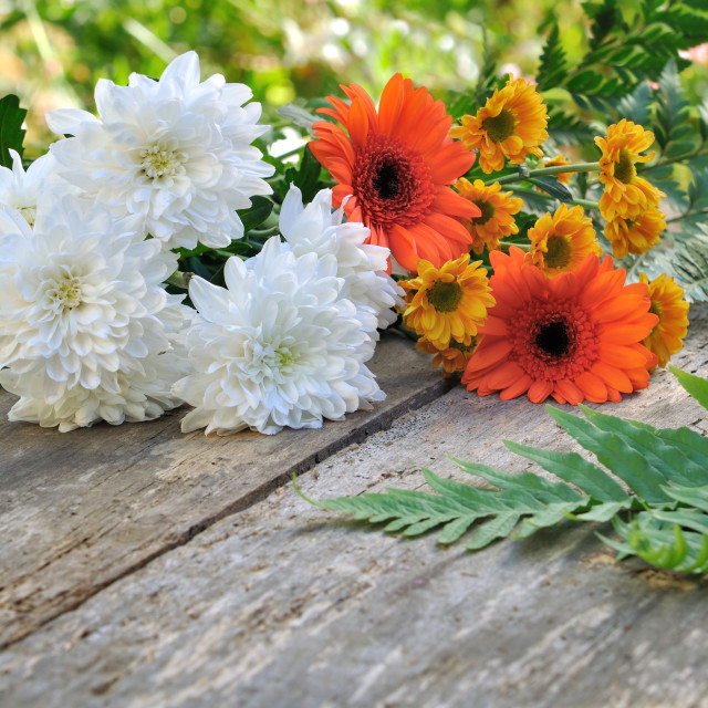 """""""pretty flowers from garden"""" stock image"""