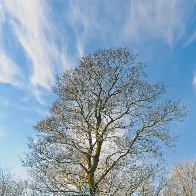 """A winters tree"" stock image"
