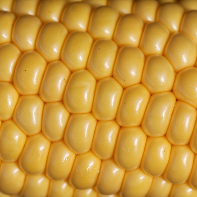 """Sweetcorn"" stock image"