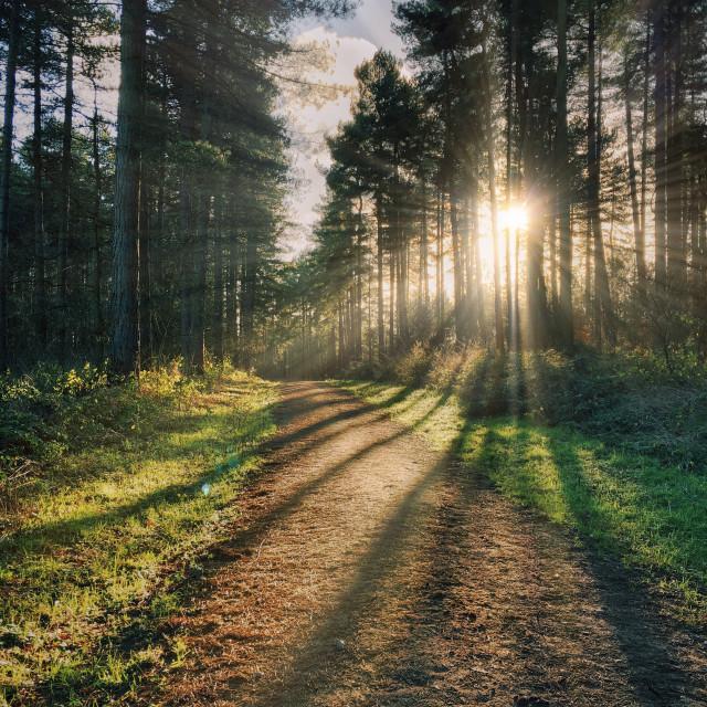 """Light through the trees"" stock image"