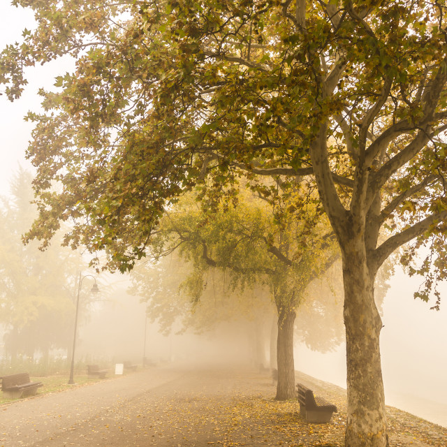 """Promenade, foggy day"" stock image"