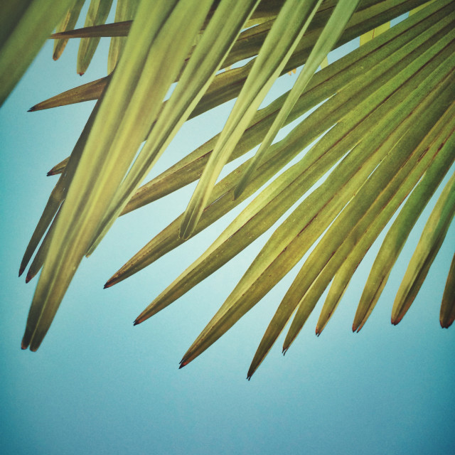 """Palm leaves and blue sky"" stock image"