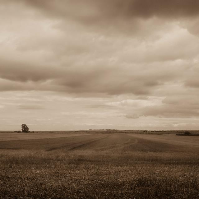"""""""Harwich Fields"""" stock image"""