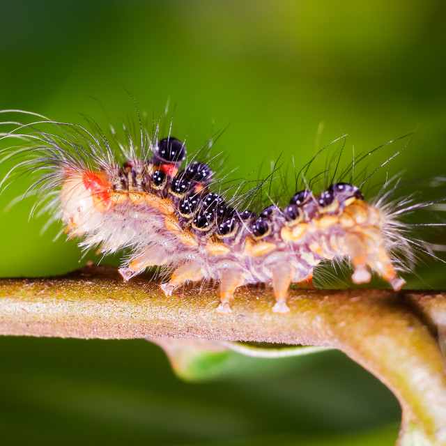 """""""Colorful worm on a tree branch"""" stock image"""