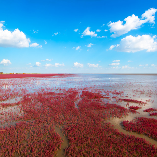 """The Red Beach, Panjin, China"" stock image"