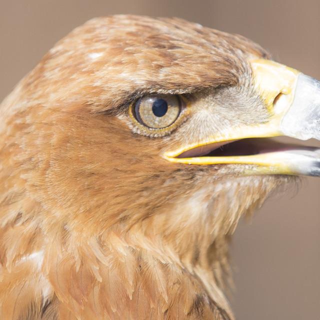 """Bird Of Prey."" stock image"