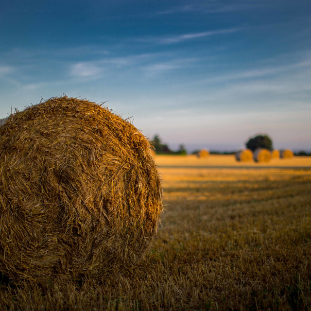 """""""Bales in a field"""" stock image"""