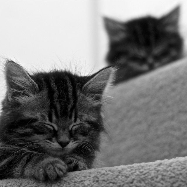 """""""Watch your step. Kittens asleep on the stairs. Mono"""" stock image"""