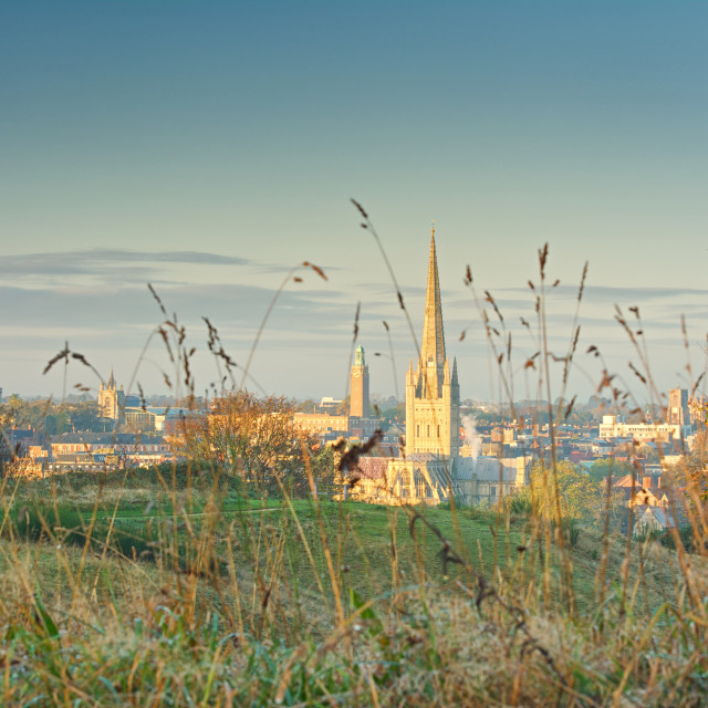 """""""Norwich dawn through the grass of Mousehold Heath"""" stock image"""