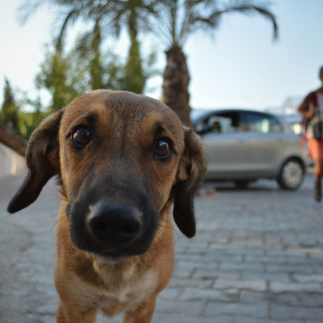 """""""Oi! Street dog fronting up to camera"""" stock image"""