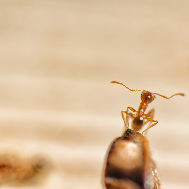"""""""Putting the feelers out. Single ant on a perch"""" stock image"""