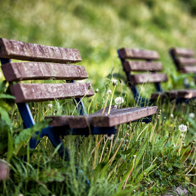 """""""Benches in the park"""" stock image"""