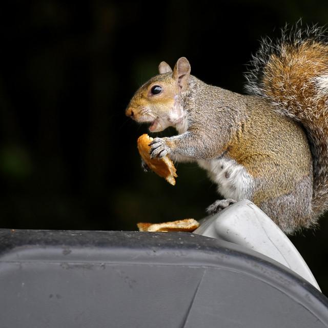 """""""Squirrels Breakfast"""" stock image"""