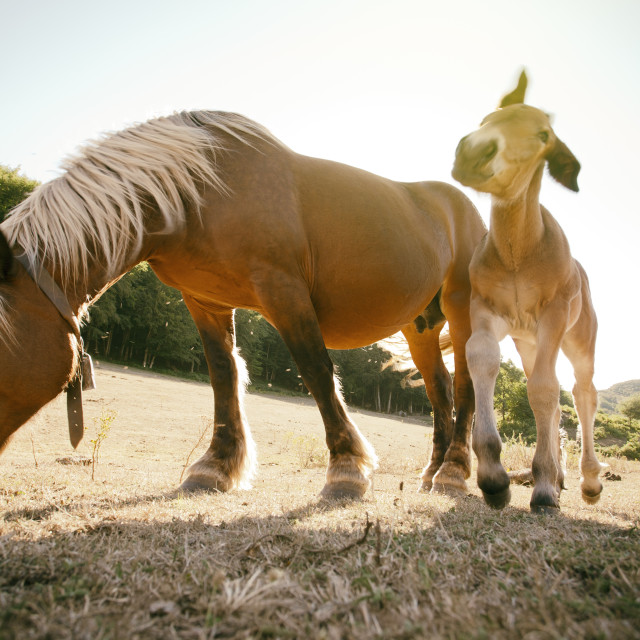 """Mare and foal"" stock image"