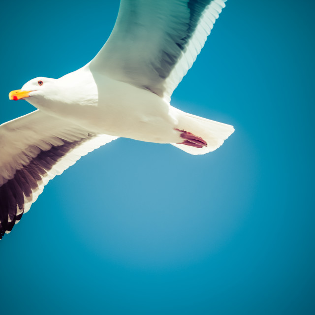 """Seagull in the sky"" stock image"