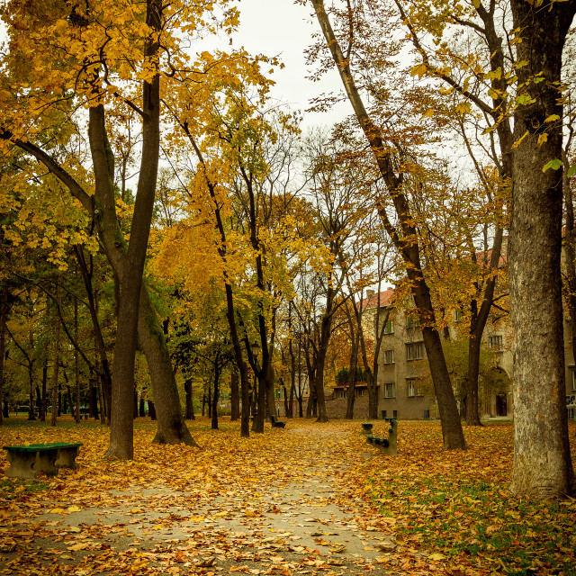 """Parc, autumn"" stock image"