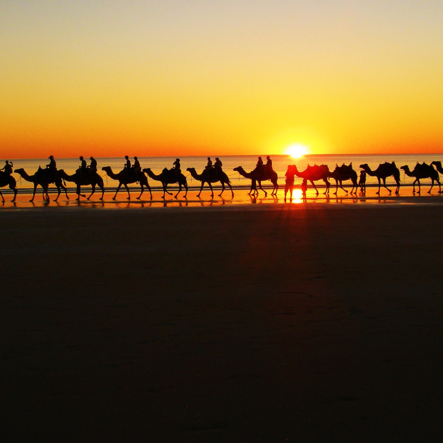 """Camels at sunset"" stock image"