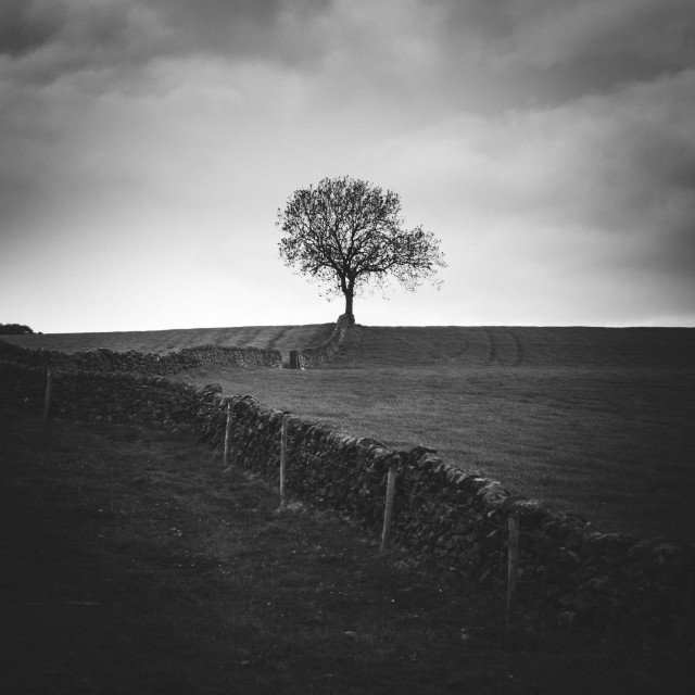 """Towards the Tree"" stock image"