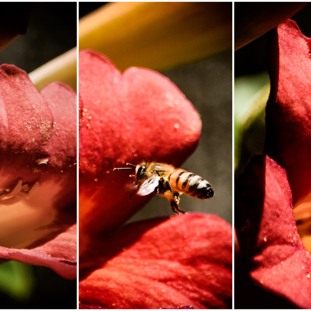 """""""Let it Bee"""" stock image"""
