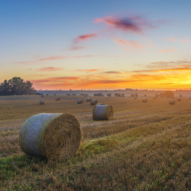 """""""field after the harvest"""" stock image"""