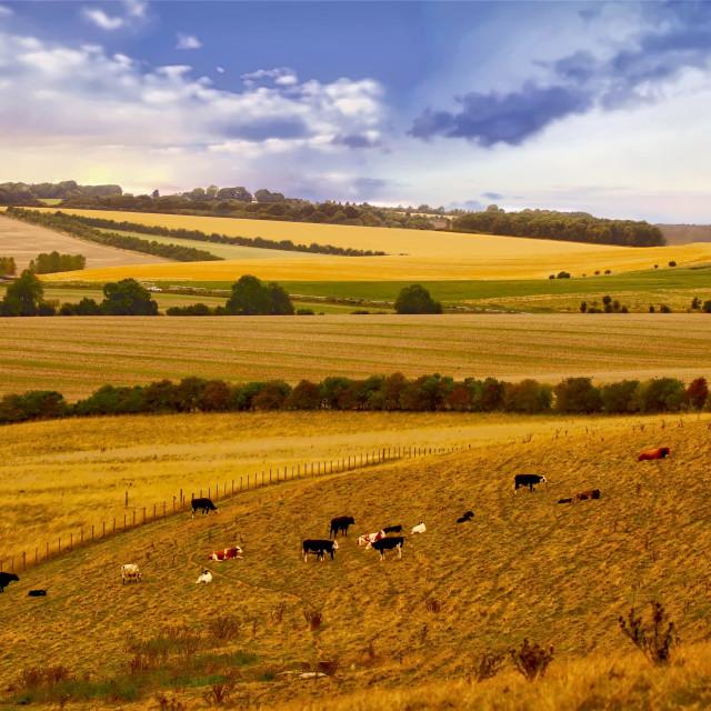 """Rolling Berkshire landscape"" stock image"