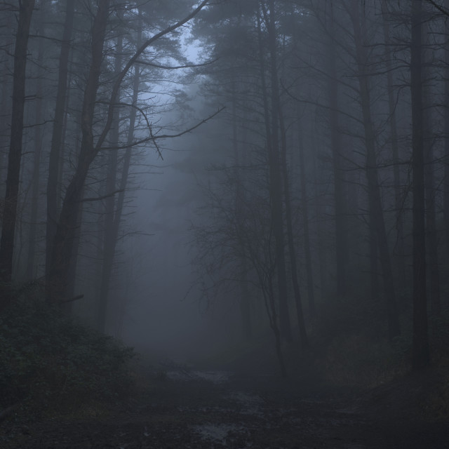 """Foggy/ Misty Woodland"" stock image"