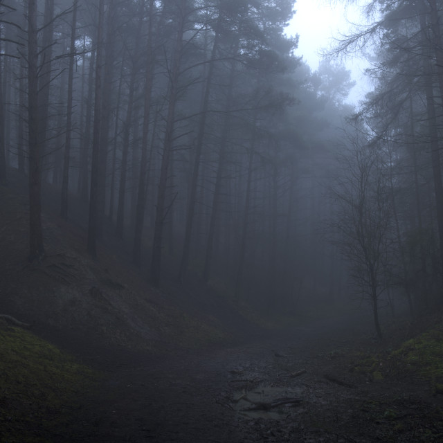 """Foggy / Misty Woodland"" stock image"