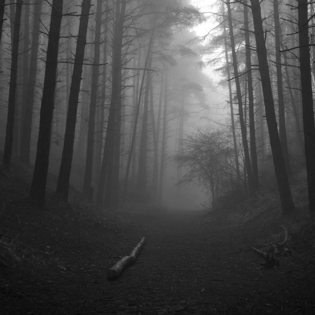 """Black and White Foggy Woodland Scene"" stock image"